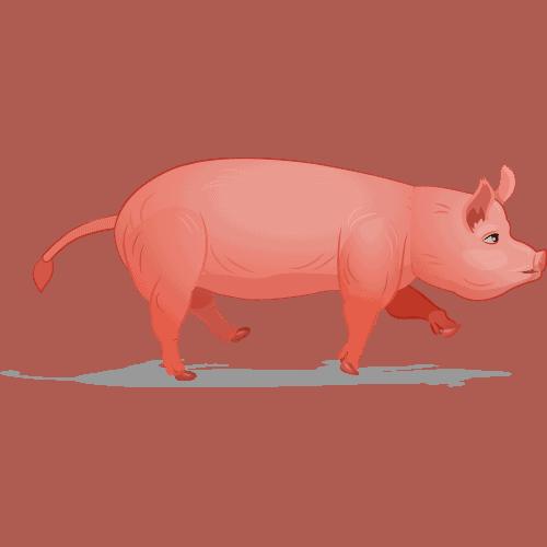 Pig Speed