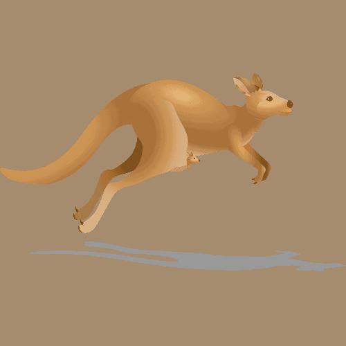 Kangaroo Speed